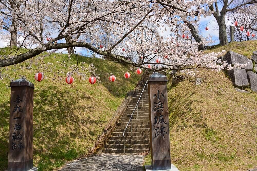 小浜城跡の桜